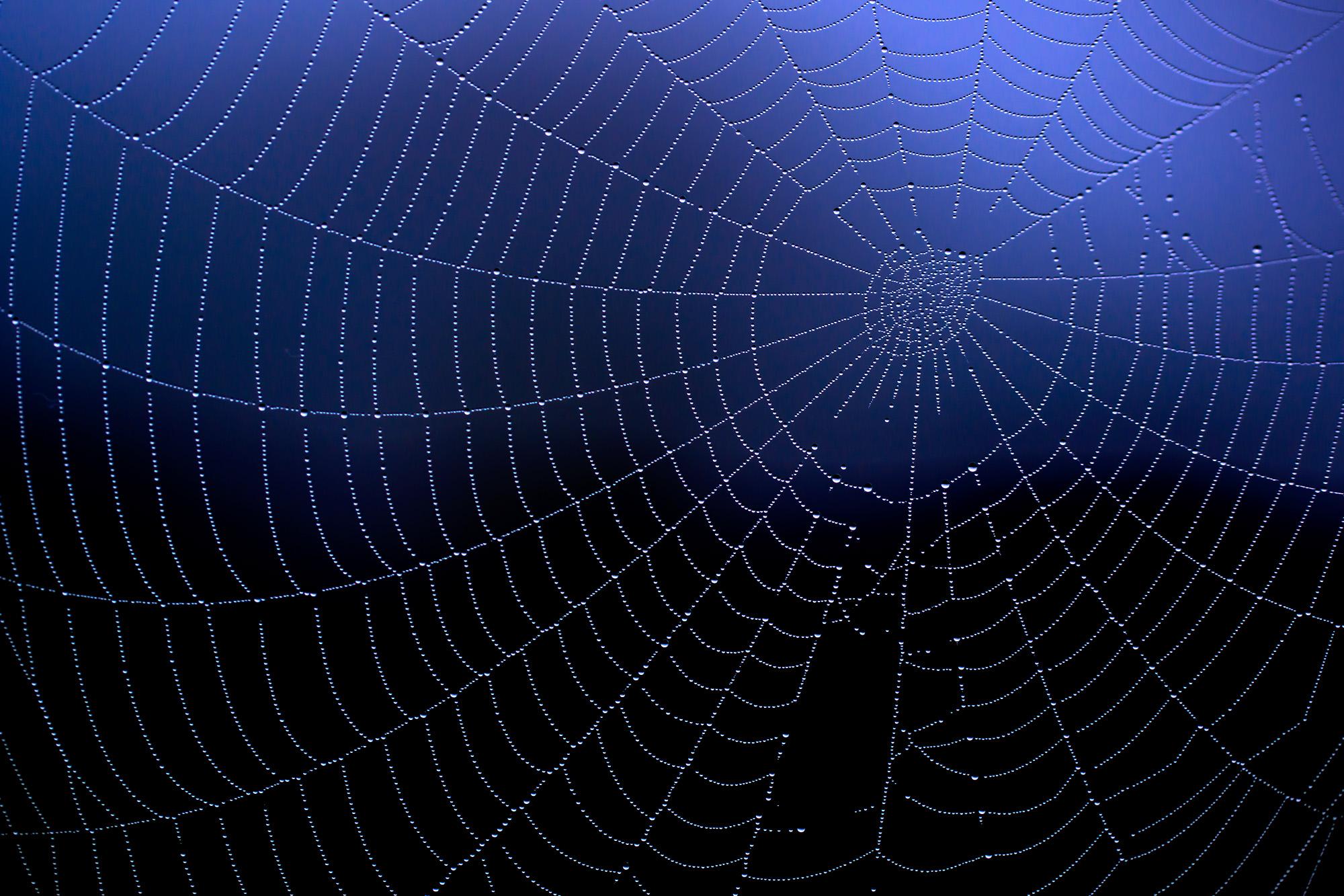 Aufruf zur Bilddiskussion – hier: Spinnennetz mit Tautropfen